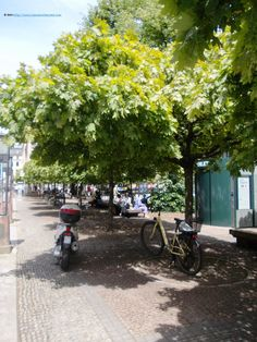 Did you know that the trees in Berlin are numbered? The counting starts in Gendarmenmarkt.