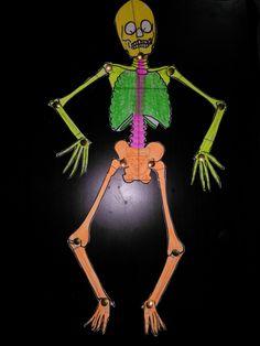 4. Sınıf için eklem yerleri hareketli iskelet