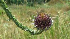 fiore selvatico