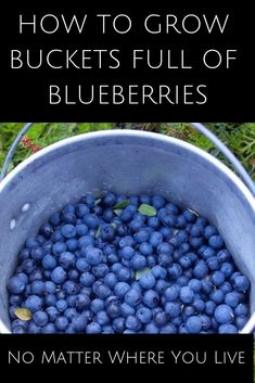 Why wouldn't you want to grow buckets full of blueberries with all that nutrition and flavorful taste too? Eat them right off the bush, add them to plain yogurt or use them in smoothies and baking. Organic Mulch, Organic Fertilizer, Organic Gardening, Gardening Tips, Vegetable Gardening, Bucket Gardening, Container Gardening, Blueberry Plant, Blueberry Bushes