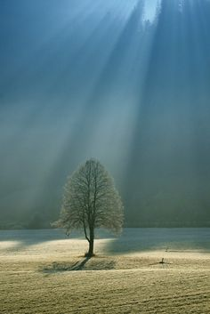 sun's rays on the tree