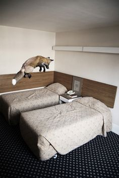 Fox in the room!