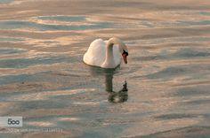 specchio di ghiaccio Graziella Serra Art & Photo  2014