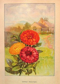 Vintage Flowers Book Print, via Flickr.