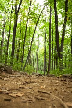 The trail.