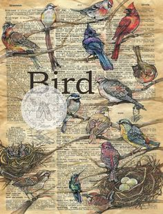 """Bird Mixed Media Drawing on 18"""" x 24"""" Antique Parchment flying shoes art studio"""