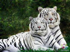 Amazing Photos With Cute Animals Around The World