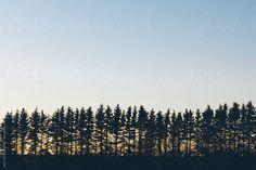 Tree Silhouette by Jen Grantham