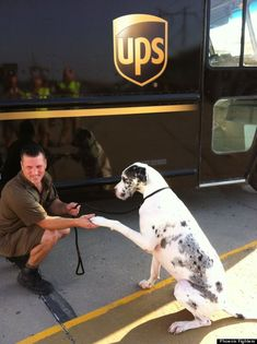 UPS driver Gavin Crowsley first spotted a Great Dane named Phoenix, the dog was so emaciated that he mistook it for a Dalmatian. Phoenix was on a short chain without food, water or shelter. Crowsley, who was in the middle of his delivery route in Indiana, had to stop.