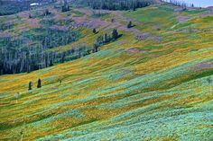Dunraven Pass Photo by Ron Hayworth -- National Geographic Your Shot