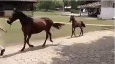 HAHAHA. | Dieses trabende Fohlen ist das Lustigste, was Du heute sehen wirst