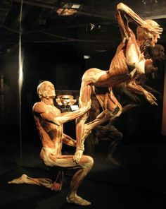 BODY WORLDS & The Cycle of Life – exhibiting real human bodies in Cape Town