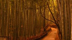 evening-Sagano-Bamboo-forest-is-beautiful-whistling