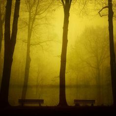 Golden forest. Don't be lost.