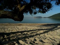 Surrounded by a pine forest, Mugoni beach is with its natural surroundings and clear water worth to visit - Sardinia