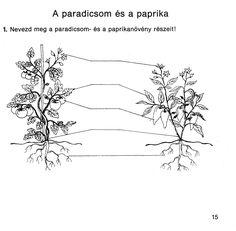 4. feladat Dandelion, Education, Teaching Ideas, Flowers, Plants, Dandelions, Florals, Plant, Training