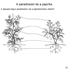 4. feladat Dandelion, Education, Teaching Ideas, Flowers, Plants, Dandelions, Plant, Onderwijs, Taraxacum Officinale