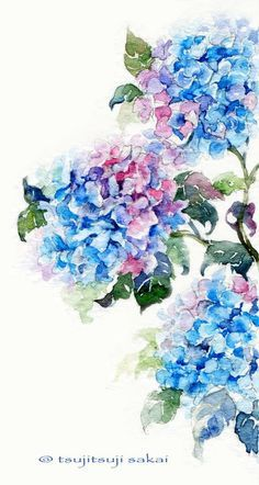 Watercolor hydrangea (scan) by Tsutsuji-Sakai Painting & Drawing, Watercolour Painting, Watercolor Flowers, Watercolors, Watercolor Portraits, Watercolor Landscape, Arte Floral, Painting Inspiration, Art Inspo