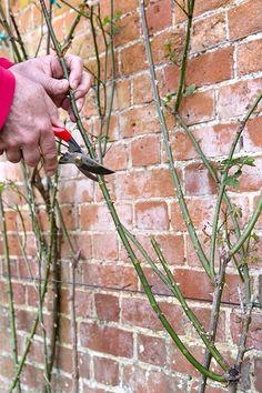 Green Tips, Outdoor Power Equipment, Succulents, Spring Summer, Flowers, Plants, Outdoors, Gardening, Ideas