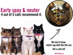 Spay and neuter cats and dogs at months to prevent unwanted litters and shelter overpopulation! Join the campaign to promote early spay / neuter awareness. Humane Society, Animal Rescue, Cats And Kittens, Dog Cat, Cute Animals, Pets, Pretty Animals, Animal Welfare, Cutest Animals