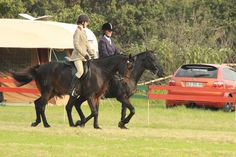 Devondale Abedan At Mpumalanga Regional championship ✨ Regional, Cow, Animals, Animais, Animales, Animaux, Animal, Dieren