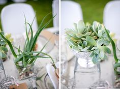 Toile & Succulents Wedding by Charmaine Spangenberg Shed Wedding, Bush Wedding, Lodge Wedding, Wedding Venues, Wedding Ideas, Nature Inspired Wedding, Game Lodge, Natural Salt, Wedding Decorations