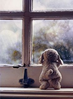 Image shared by Mahran zon. Find images and videos about rain, window and bear on We Heart It - the app to get lost in what you love. Through The Window, Toys Photography, Photography Essentials, Bokeh Photography, Rainy Days, Belle Photo, Moonlight, Cute Animals, Wild Animals