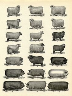 Vintge Printable Download - Farm Animals - Instant Art - The Graphics Fairy