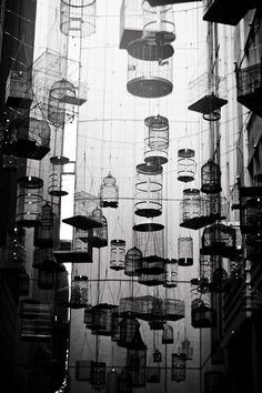 cage bird caged, by Fiona Gohari