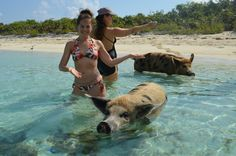 While you've probably heard of swimming with fish, dolphins and other marine creatures, Big Major Spot in the Bahamas' Exumas Cays is the only place I've ever heard of where you can literally swim with pigs Flamingo Beach Aruba, Pig Beach, Exuma Bahamas, Bahamas Vacation, Pig Island, Wild Animal Sanctuary, Surviving In The Wild, Swimming, Adventure