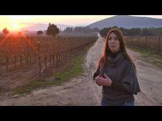 JAMESSUCKLING - Chile: Pinot Noir II - Veramonte - Casablanca's Pinots