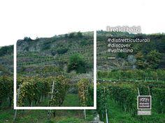 """""""E tu pendevi tralcio dai retici balzi... è bello al sole de l'Alpi mescere il nobil tuo vin cantando"""" (Giosuè Carducci)  Scopri il sapore del sasso e delle vie impervie che ha il vino Sassella, nel Distretto Culturale della Valtellina.  #distretticulturali #discover #valtellina  http://www.valtellina.it/info/2090/sassella.html"""