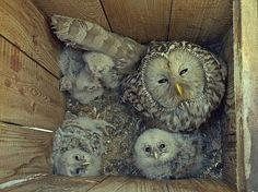 Ok...if we had an owl box...and a family of owls moved in; Id never get to work for staring ooohhh & ahhhhhing
