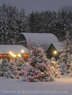 snow covered trees and barns... the perfect Christmas card scenery
