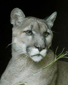 comunauté des lions et lionnes - Comunidad - Google+