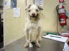 It's a heartless world: 15-year-old dog surrendered to California shelter