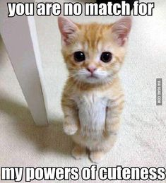 Funny Animal Pictures With Captions - 20 Pics