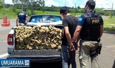 PRF apreende mais de 137 kg de Maconha em Porto Camargo