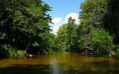 The beautiful green of East Tennessee's Watauga River East Tennessee, Travel Planner, Where To Go, Fairy Tales, Thailand, River, Green, Outdoor, Beautiful
