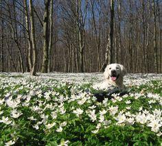 Hiding in a field of flowers