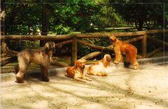 Cuper y Adur con sus amigos en el Parque San Francisco
