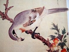 Chinese Grey Shrike / Edo Period Japan