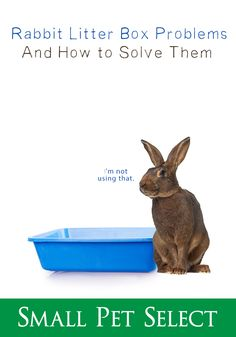 You trained your bunny to use a rabbit litter box and he suddenly stopped. There are many factors that can cause a bunny to revert to bad habits. Litter Training Rabbits, Rabbit Litter Box, Box Bunny, Bunny Care, Medical Problems, Bad Habits, Suddenly, Factors