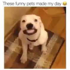 These are hilarious 😂,Funny, Funny Categories Fuunyy Source by supercuteanimals. Funny Animal Memes, Cute Funny Animals, Funny Animal Pictures, Cute Baby Animals, Funny Cute, Funny Dogs, Animals And Pets, Funny Memes, Hilarious