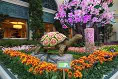 Blooming cherry blossoms, peaceful waterfalls and traditional Japanese architecture welcome the spring season to Bellagio's Conservatory & Botanical Gardens, now through May 14. Upon entering the Japanese-themed spring display, visitors will embark on an outing of the senses starting with … Continue reading →