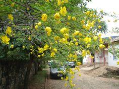 Flores de plantas trepadeiras em muros de pedras de novas residências de Tiradentes, Minas Gerais || Foto: Pedro Andrade
