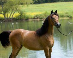 Google Image Result for http://3.bp.blogspot.com/_To_nsDE_7TA/TOk0s1wqw3I/AAAAAAAAA3A/ITg27l5f-4s/s1600/horse.jpg
