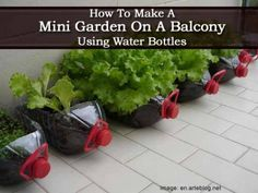 How To Make A Mini Garden On A Balcony Using Water Bottles