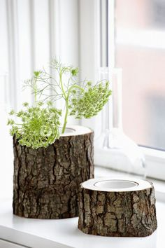 Trending Now:  NATURE  Tree Stump Vases