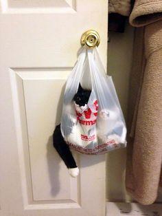 preuve chat débile 40